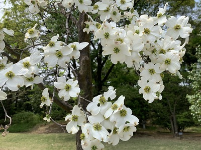 f:id:keiko-blog:20190510135555j:plain