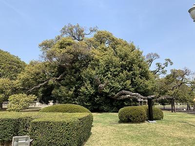 f:id:keiko-blog:20190510135613j:plain