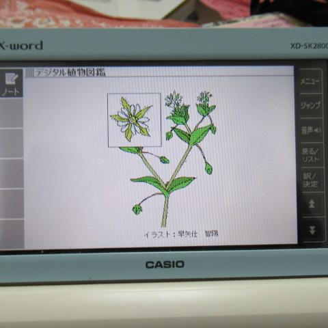 f:id:keima-no-takatobi:20200117164059j:plain