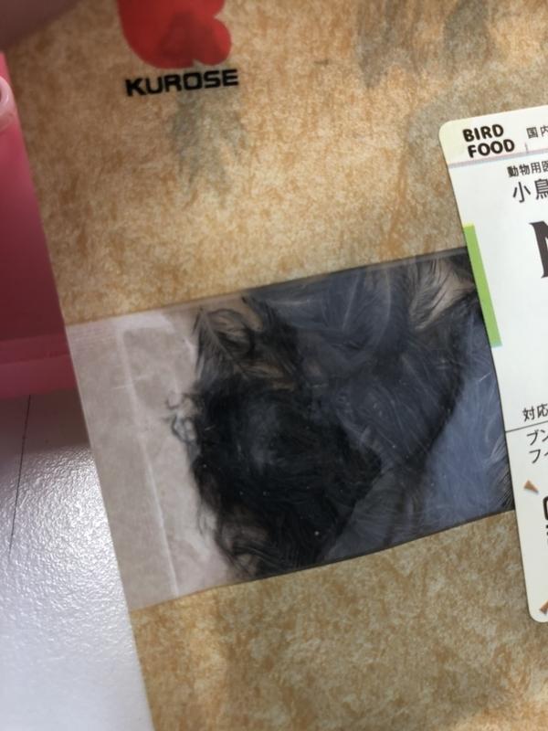 f:id:keiseki-kairo:20210520141038j:plain