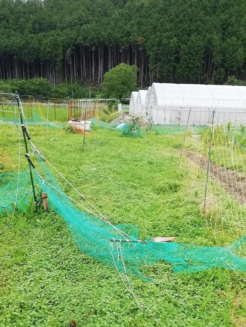 f:id:keisfarm:20200713114055j:plain