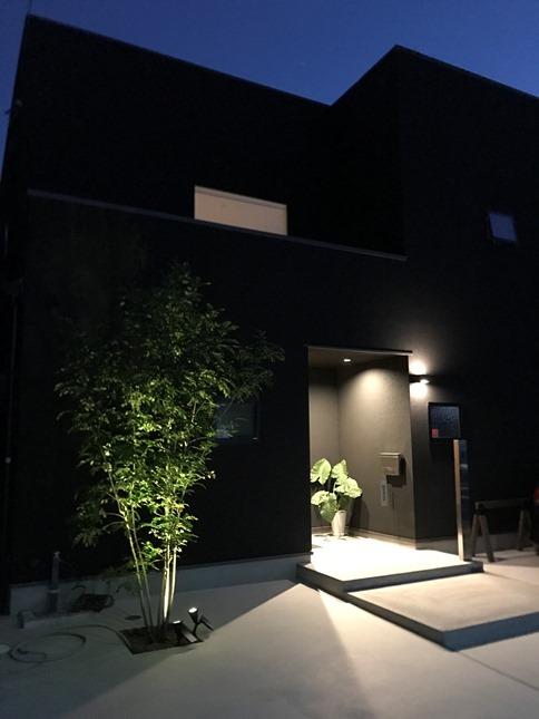 #シマトネリコ#LED#ライトアップ#外灯