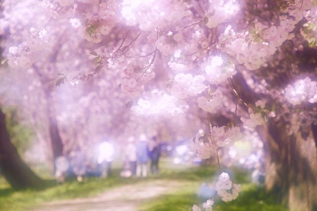 f:id:keisukemurayama:20190402101503j:plain
