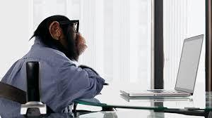 エロサイトを見る猿