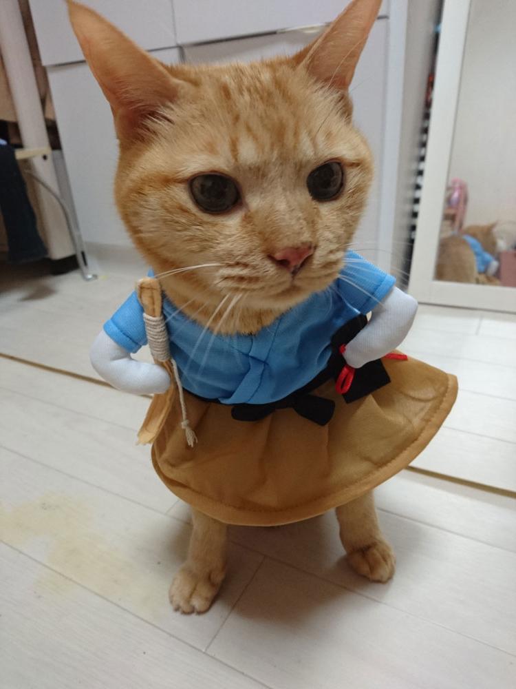 f:id:keizanago:20180217182923j:plain