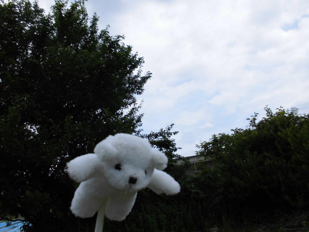 f:id:keizanago:20180618211925j:plain