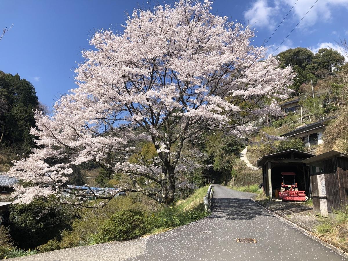 f:id:kemonomichiyoushii:20190406190541j:plain