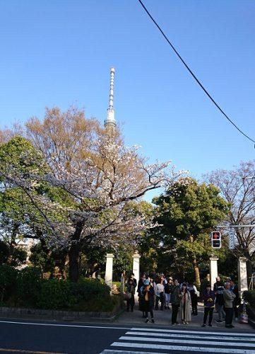隅田公園桜