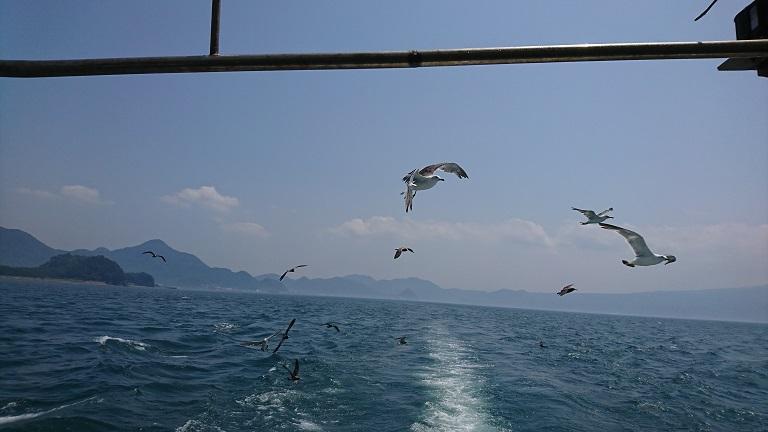 駿河湾とカモメ