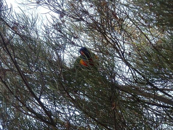 公園内で見かけた鳥