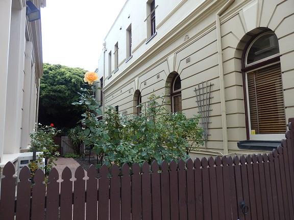 街並みバラがあるお庭