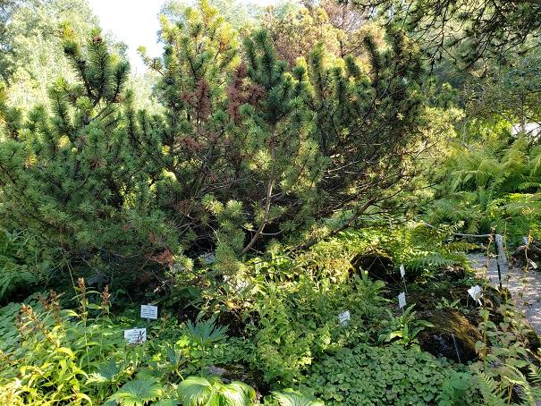 日本の植物