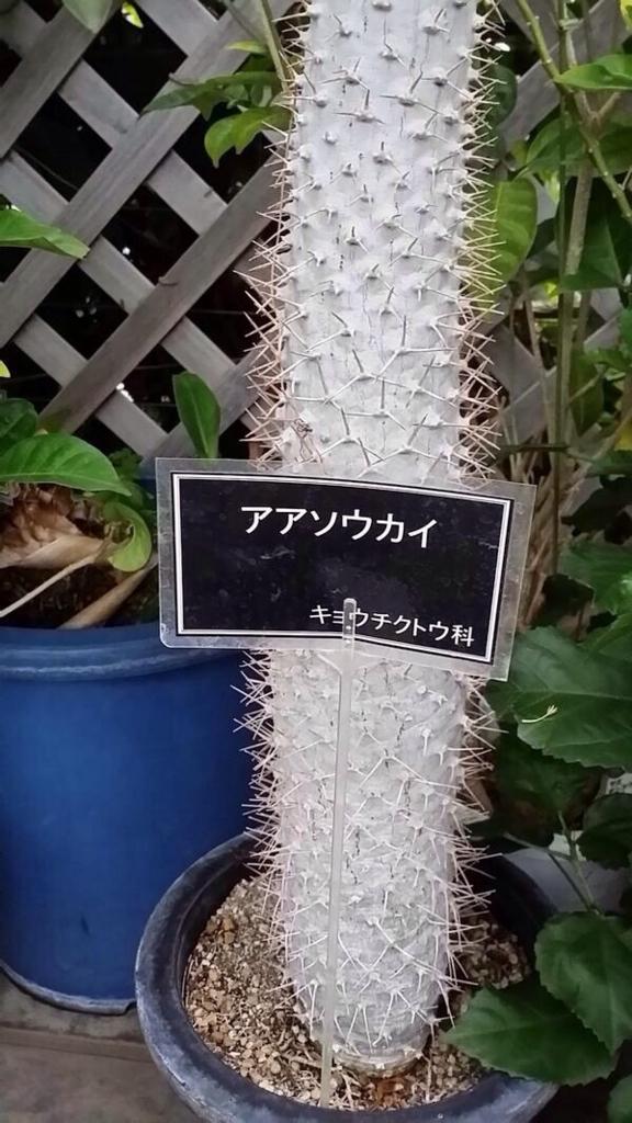 f:id:kemurikikakuku:20160831214226j:plain