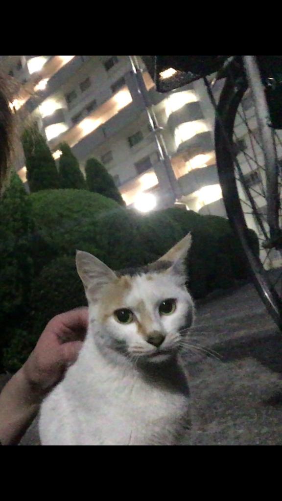 f:id:kemurikikakuku:20170622232124p:plain