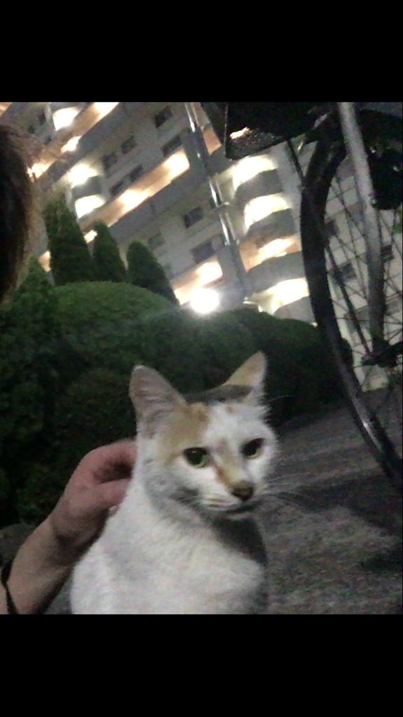 f:id:kemurikikakuku:20170622232142p:plain