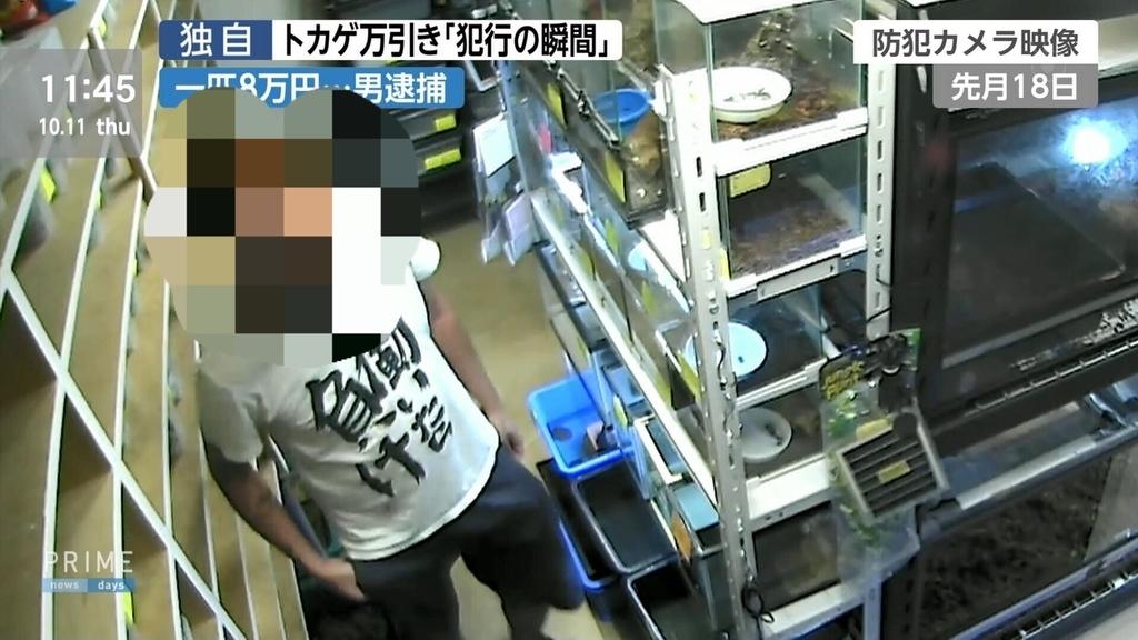 f:id:kemurikikakuku:20181012065128j:plain