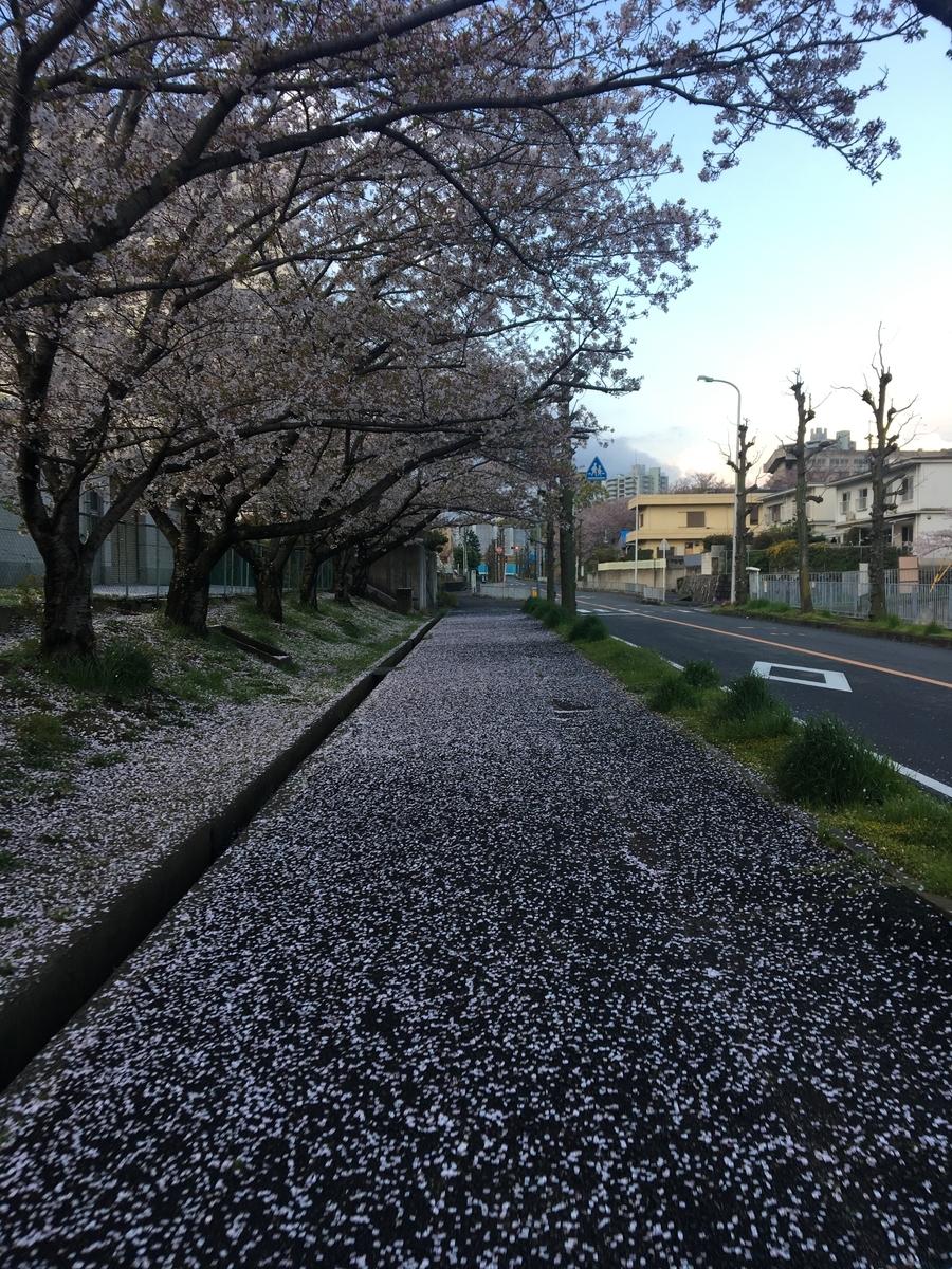 f:id:kemurikikakuku:20190416171508j:plain