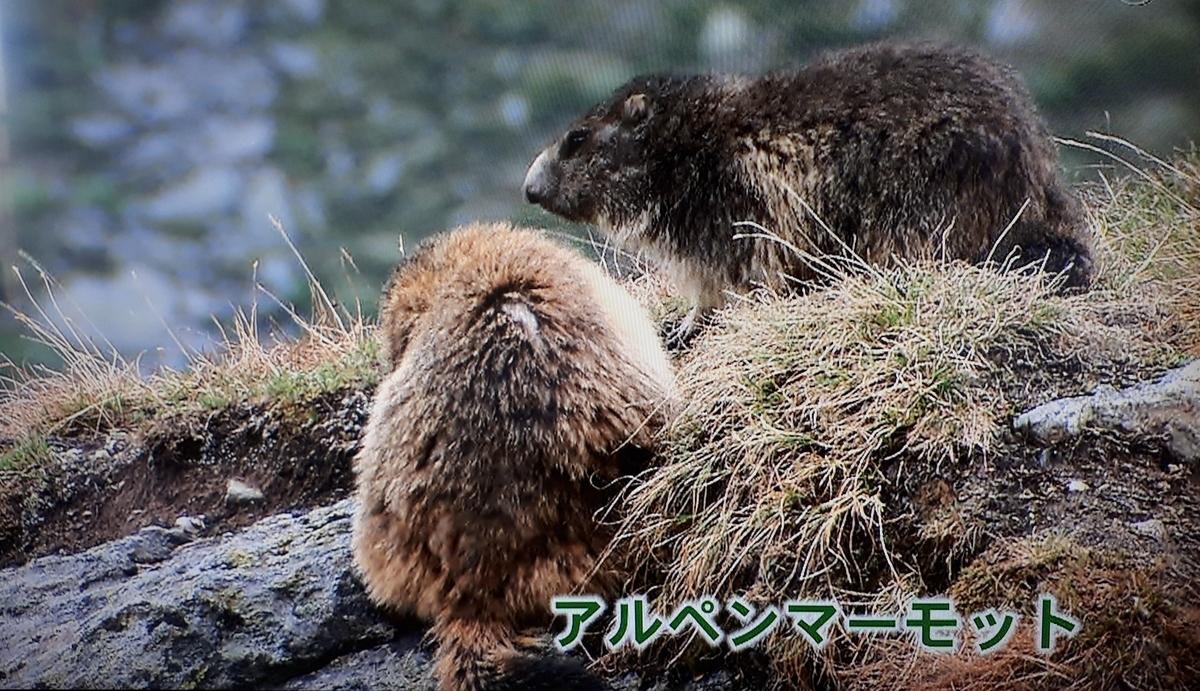 f:id:ken-jiiji-itohkun:20210329210109j:plain