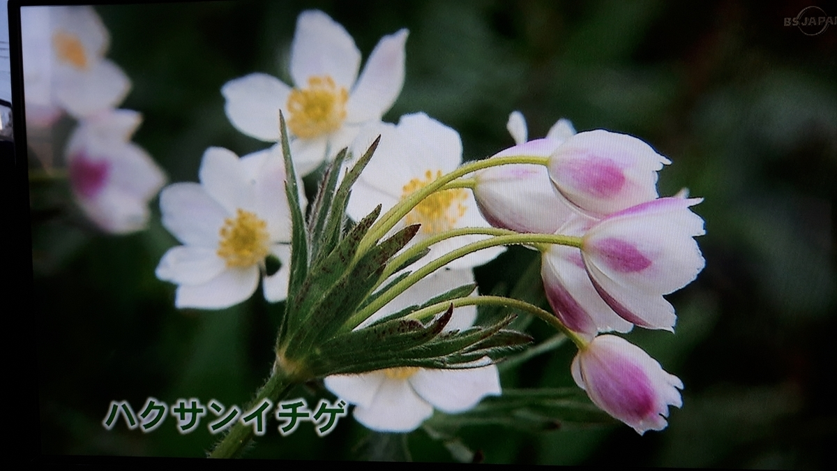 f:id:ken-jiiji-itohkun:20210329210330j:plain