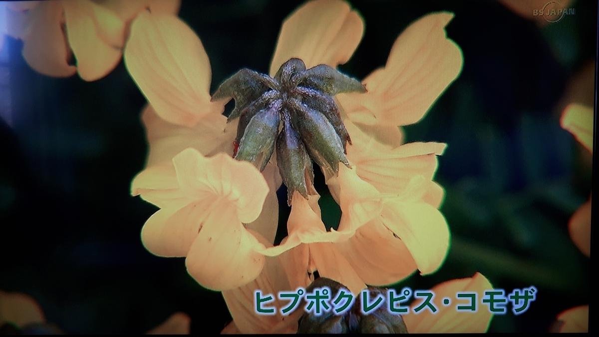 f:id:ken-jiiji-itohkun:20210329210522j:plain