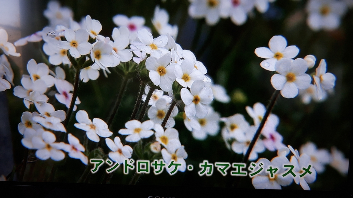 f:id:ken-jiiji-itohkun:20210329210716j:plain