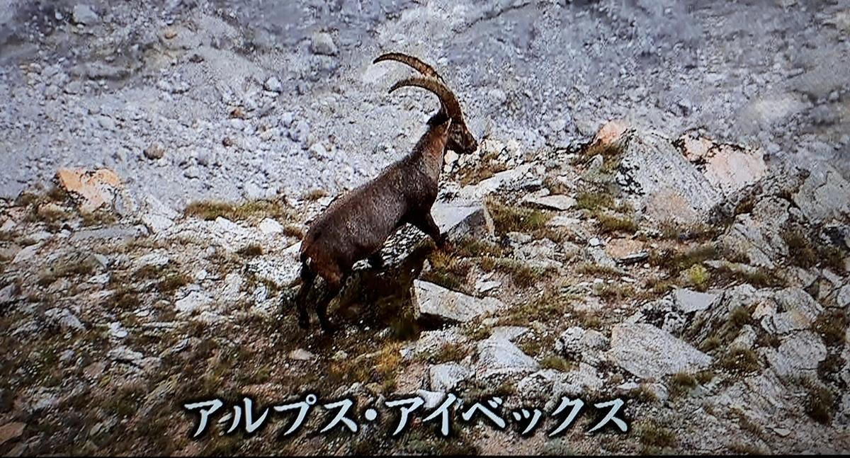 f:id:ken-jiiji-itohkun:20210409203153j:plain