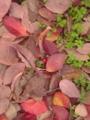 街路樹の根元…晩秋、だねぇ