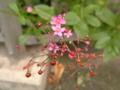 道端の花。花は濃いめのピンク、実と茎が赤。めんこいのぅ〜