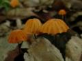 オレンジの傘。ちっちゃいのにこれまた精巧な。もち、きのこ
