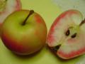 りんご。果肉まで赤いってオモロイ。築地、やっぱり楽しい〜