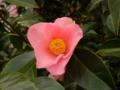 通勤路 途中の花に 目をやれば そのかわいさに 心なごむ
