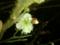 帰り道 ようやく気づいた 梅の花 #jhaiku 視野が狭かった…