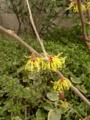 細長く 刻んだアレを 思い出す 白胡麻ふって 箸休め #jtanka 地味な花だ