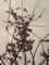 梅は散り 杏子満開 桜まだ? 次々続く 春の饗宴 #jtanka …アンズの写真