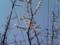 今朝の杏子。昨日の強風ですっかり寂しく…実がなるかなあ?