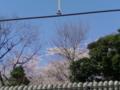 盛りは過ぎたが まだまだ愛し 屋根からのぞく その姿 #dodoitsu やっぱり