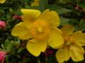 かわいらしき、この花…なんだっけ?