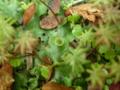 妖精のお茶セット。苔のテーブル、苔の茶碗、苔のパラソル。