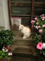 味のある玄関に、味のある猫。なんともないところが、いとおしい…