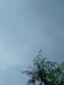 明けてました、梅雨。といわれそうな天気、三日目。さっぱりしてて気