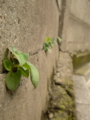 壁の割れ目からこんにちは。