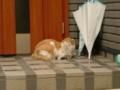 玄関で休む老猫。老いてるというのは、今までいろんなことを丸くおさ