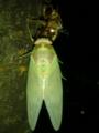 【虫嫌い注意】羽を伸ばしてます。蟻に見つかった子もいました。ホン
