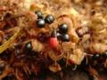【虫嫌い注意】実りの秋は虫たちにも。