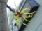 マンサク、初めて近くでまじまじ見た…細い4枚の花びらがついた花が
