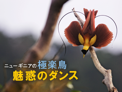 f:id:ken2daisuki:20170424094706j:plain