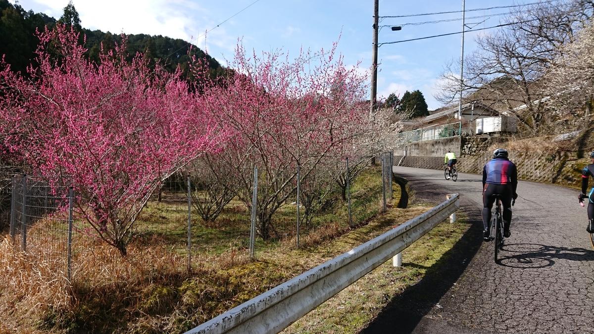 f:id:ken_chan_bike:20200301100716j:plain