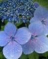 [ハイク][植物]花写真