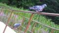 [動物][風景]鳥写真