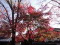 [植物][秋]